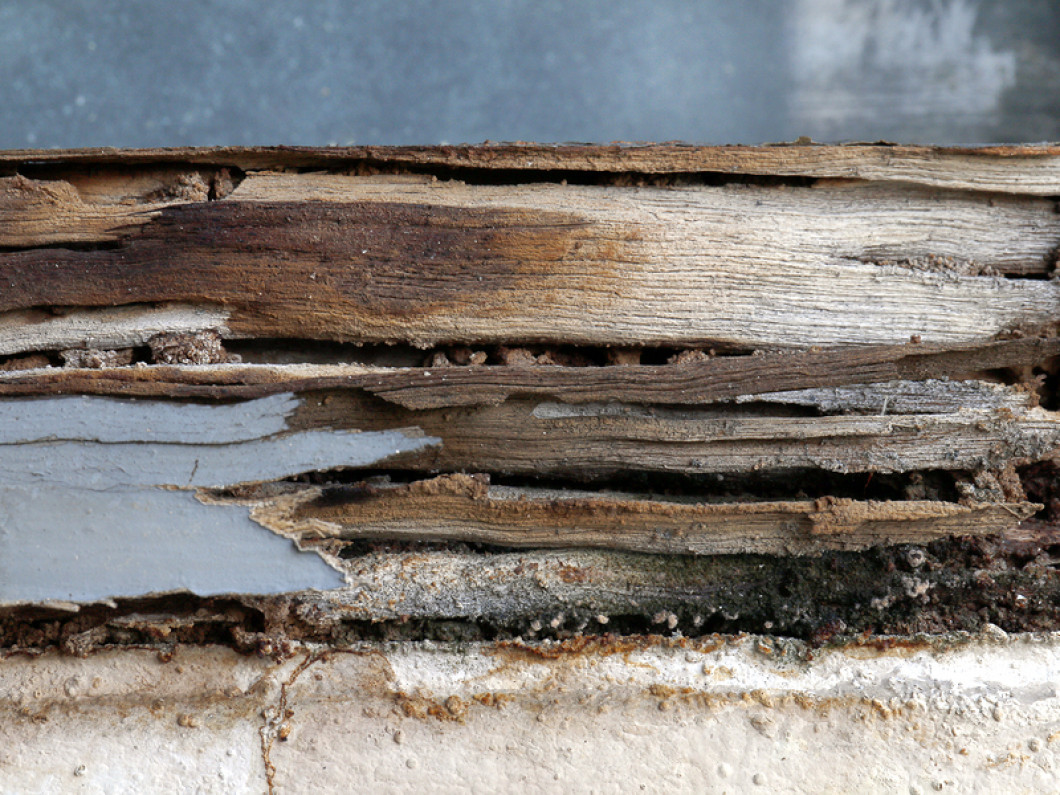 Don't Let Termites Ruin Your Biggest Investment